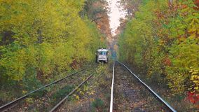 Tram in the autumn forest stock video