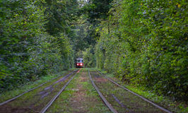 Tram goes through a tunnel in the forest Stock Images
