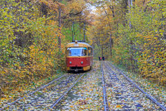 Tram goes through a tunnel in the forest Royalty Free Stock Images