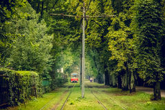 Tram line runs in the thickets of trees. Old red tram at the perspective distance. Royalty Free Stock Photo