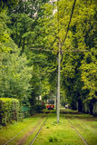 Tram line runs in the thickets of trees. Red tram at the perspective distance Royalty Free Stock Images