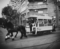 Tram parade. Old tram with horses at Tram Parade in Bucharest, celebration 100 years of public transportation Royalty Free Stock Photo