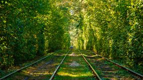 Tram and tram rails in colorful forest. Close up Royalty Free Stock Image