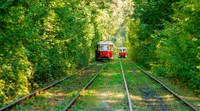 Tram and tram rails in colorful forest. Close up Royalty Free Stock Images