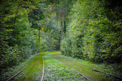 Tram rails in the forest park city zone Stock Image