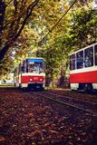 The tram rides through the autumn alley. Red trams rides through the autumn alley among bright trees. Alley strewn with autumn leaves Stock Photos