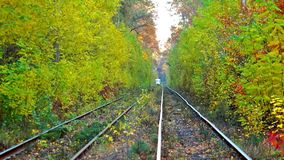 Tram Rides Through The Autumn Forest. Tram Rides Through The Beautiful Autumn Forest stock video footage