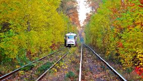 Tram Rides Through The Autumn Forest. Tram Rides Through The Beautiful Autumn Forest stock video