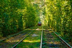 Tram and tram rails in colorful forest. Close up Stock Photos