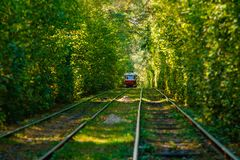 Tram and tram rails in colorful forest. Close up Royalty Free Stock Photo