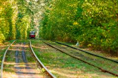 Tram and tram rails in colorful forest. Close up Stock Images