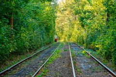 Tram and tram rails in colorful forest. Close up Stock Photo