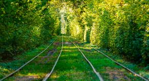 Tram and tram rails in colorful forest. Close up Stock Image