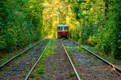 Tram and tram rails in colorful forest. Close up Royalty Free Stock Photography