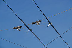 Tram wires. With blue sky background royalty free stock images