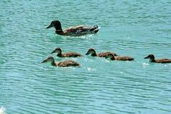 Tramas en el lago Imagen de archivo