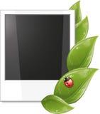 Trame blanc de photo avec les lames et la coccinelle de vert Photographie stock libre de droits