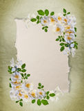 Trame blanche de roses Image stock