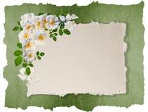 Trame blanche de roses Images libres de droits