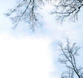 Trame d'arbres de l'hiver Images libres de droits