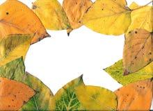 Trame d'automne. Photographie stock libre de droits