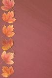 Trame d'automne Image stock