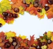 Trame d'automne Images libres de droits