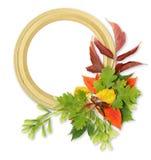 Trame d'automne de couleur Photos stock