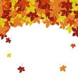Trame d'automne Fond de vecteur Illustration de vecteur Modèle floral de vecteur Conception graphique de mode Concept de beauté C Photos stock