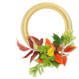 Trame d'isolement d'automne Photo stock