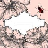 Trame de cru avec les roses et le coléoptère de floraison. illustration libre de droits