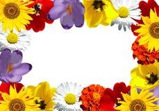 Trame de fleur Images stock