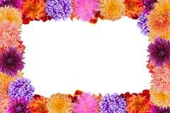 Trame de fleur Photographie stock libre de droits