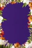 Trame de fleur Images libres de droits