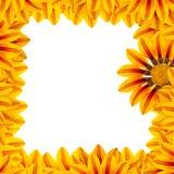 trame de fleur d'or Photo stock