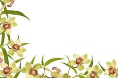 Trame de fleur d'orchidée image libre de droits