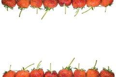 Trame de fraises Image stock