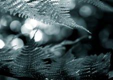 Trame de fronde de fougère de Duotone Images libres de droits