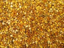 Trame de granules de pollen pleine Images stock