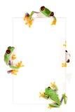 Trame de grenouille Photographie stock libre de droits