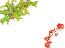 Trame de houx de Noël d'isolement image stock