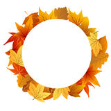 Trame de lame d'automne Photos stock