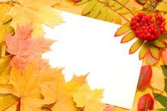 Trame de lame d'automne d'automne Photos libres de droits