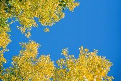Trame de lames d'automne Image stock