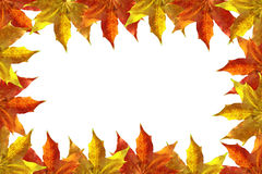 Trame de lames d'automne Images stock