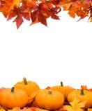 Trame de moisson d'automne Photos libres de droits