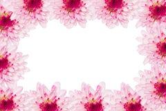 Trame de momie de fleur Photos libres de droits