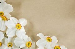 Trame de Narcis Photo stock