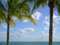 Trame de palmier Image libre de droits