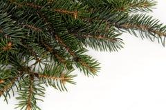 Trame de pin de Noël Images stock
